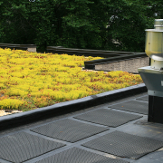 green roof commercial building